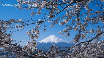 fuji-5_blog.jpg