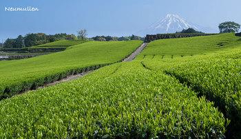 tea_garden-8_blog.jpg
